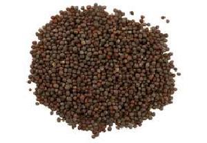 Mustard Seeds 02