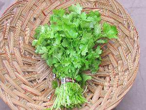 Fresh Coriander Leaves (Kothamalli)