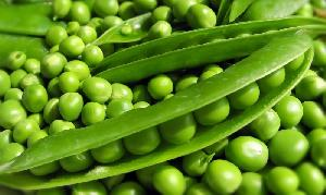 Fresh Green Peas (Pattani)