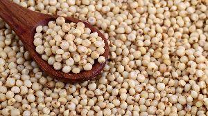 Jowar Seeds