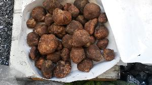 Brown Truffle