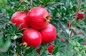Fresh Pomegrannate 03