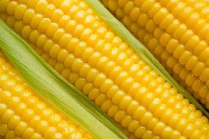 Sweet Corn 03