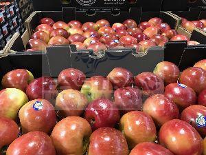 Fresh Apple 02