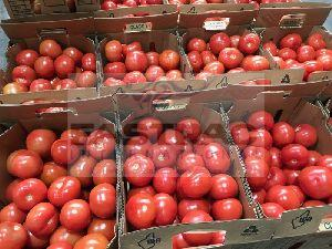 Fresh Tomato 03