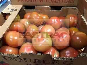 Fresh Tomato 04