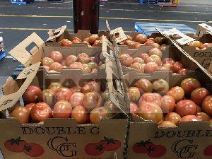 Fresh Tomato 05