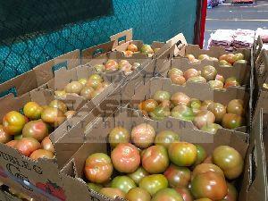 Fresh Tomato 06