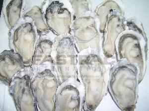 Frozen Oysters