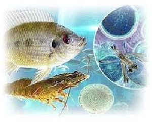 Aquaculture Chemicals