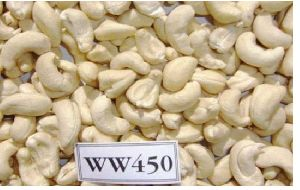 WW450 Cashew Nuts