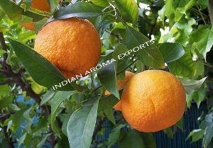Natural Mandarin Essential Oil