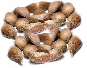 Natural Sugandh Mantri Essential Oil