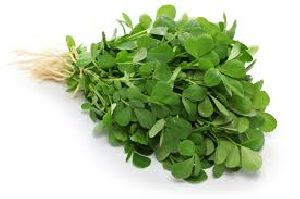 Fresh Fenugreek Leaves 01