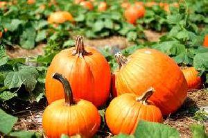 Fresh Pumpkin 02