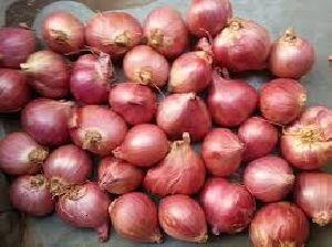 Fresh Small Onion 02