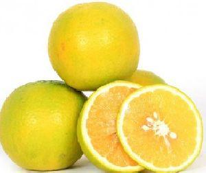 Fresh Sweet Lemon