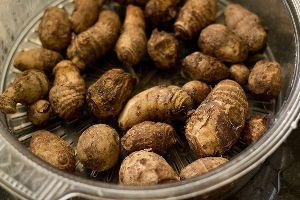 Fresh Taro Root 02