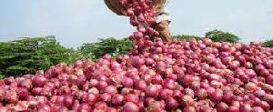 Fresh Red Onion 05