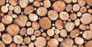 Neem Wood Logs