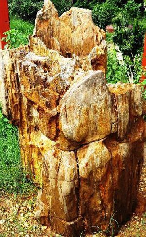 Petrified Wood 01
