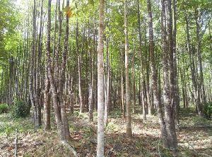 Petrified Wood 02
