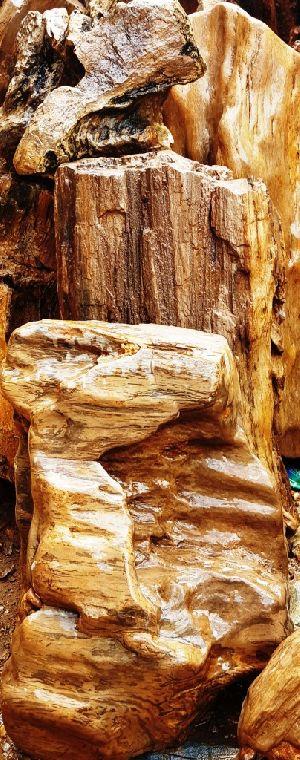 Petrified Wood 05