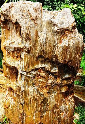 Petrified Wood 07