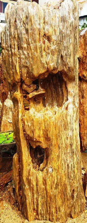 Petrified Wood 09