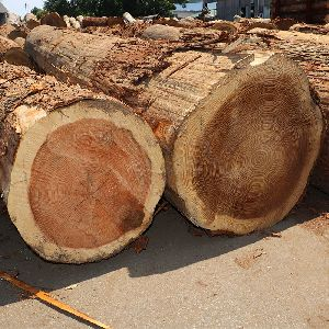 Japanese Cedar Wood Logs