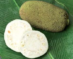 Tender Jackfruit