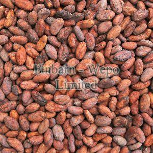 Raw Cocoa Beans 01