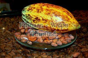 Raw Cocoa Beans 02