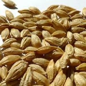 100% Organic Barley