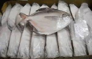 Frozen Grade A White Silver Pomfret Fish