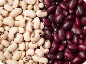 Top Quality Grade A Purple Spotted Kidney Beans