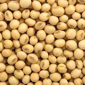 Soybean Seeds 02