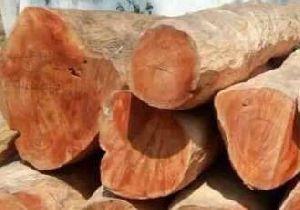 Artocarpus Wood 02