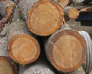 Pine Wood 02