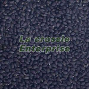 Basil Bio Organic Seeds 01