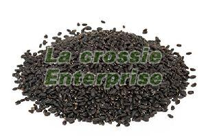 Basil Bio Organic Seeds 02