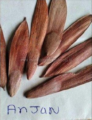 Anjan Tree Seeds