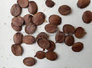 Bauhinia Purpurea Seeds
