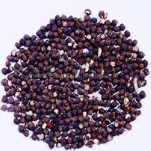 Bombax Ceiba Seeds