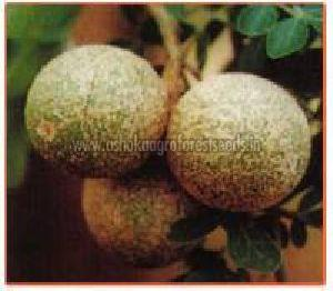 Feronia Limonia Plant