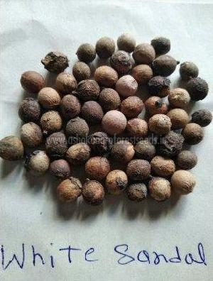 White Sandalwood Seeds