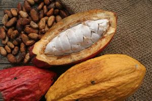 Raw Cocoa Nuts