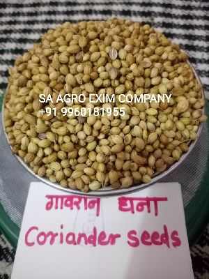 Indian Coriander Seeds