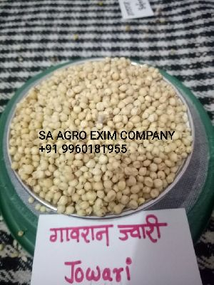 ORGANIC YELLOW JOWAR GRAIN