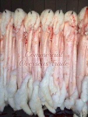 COD 7 Rabbit Skin 02